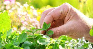 A ajuda que vem da natureza, na forma de ervas