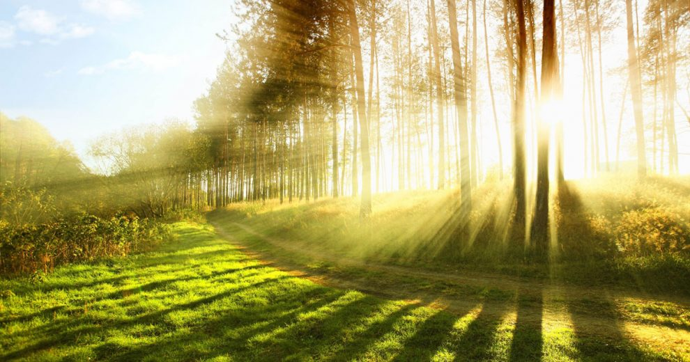 O contato com a natureza traz diversos benefícios, entre eles restabelecer a saúde mental