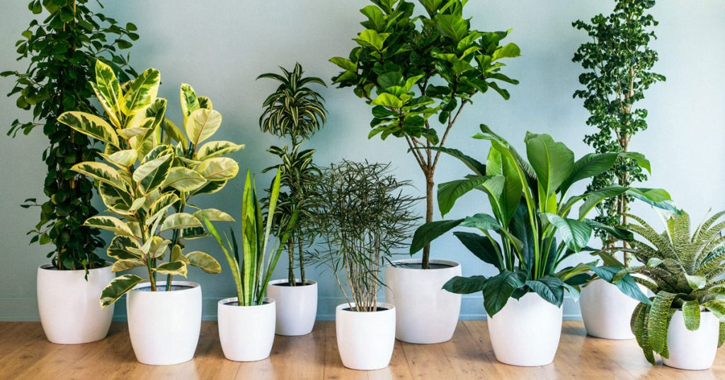 Como decorar sua casa com plantas for Plantas para decorar interiores