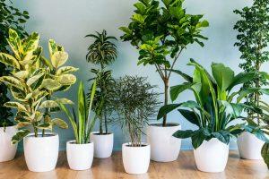 Ideias criativas para decorar sua casa com plantas