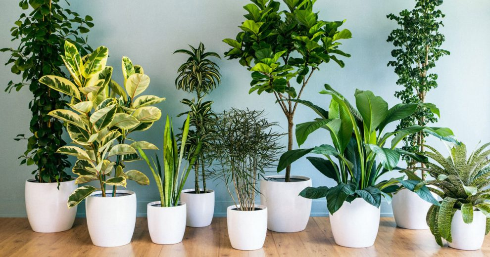Como decorar sua casa com plantas for Casas decoradas con plantas de interior