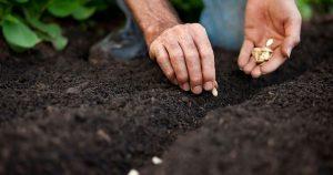 Participe de eventos que reúnem pessoas interessadas em troca de mudas e sementes