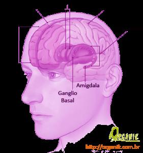 Tratamento da Depressão com Óleos Essenciais - Organik - Área cerebral atingida pela depressão