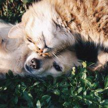 coragem para cães e gatos